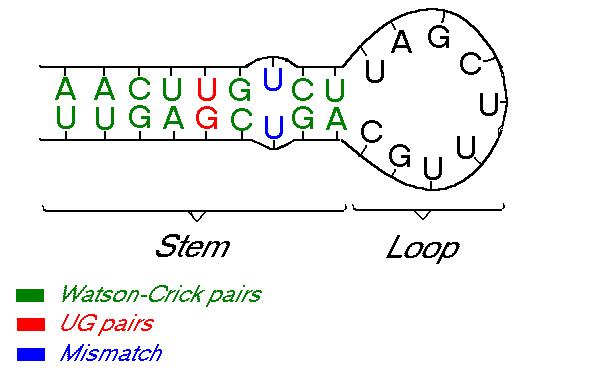 RNA Molecule
